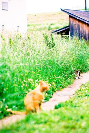 2匹のネコの写真素材 [FYI00116035]