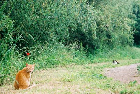 二匹のネコの写真素材 [FYI00116041]