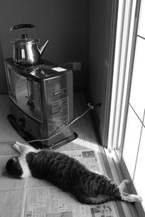 あたたまるネコの写真素材 [FYI00116206]