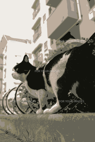 団地内の野良猫の素材 [FYI00116241]