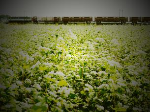 蕎麦畑と貨物列車の写真素材 [FYI00116323]