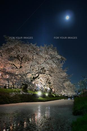 川越の桜の素材 [FYI00116324]