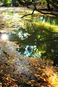 落ち葉がたくさん浮かぶ池の素材 [FYI00116360]
