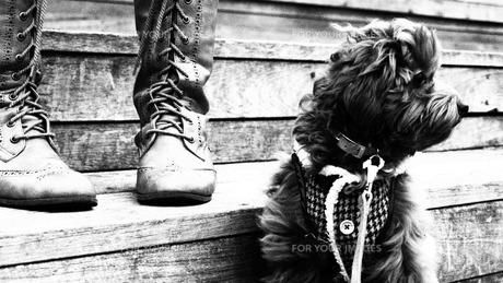 犬の散歩の写真素材 [FYI00116556]
