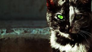 野良猫の写真素材 [FYI00116578]
