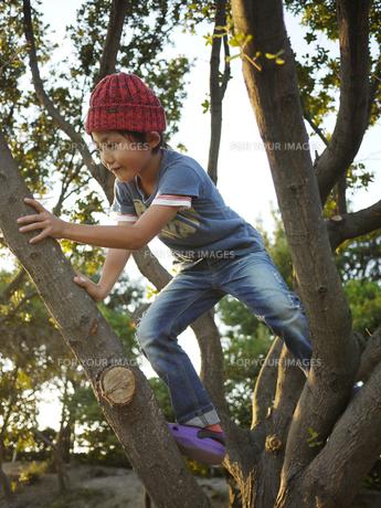 木登りをする子供の写真素材 [FYI00116583]