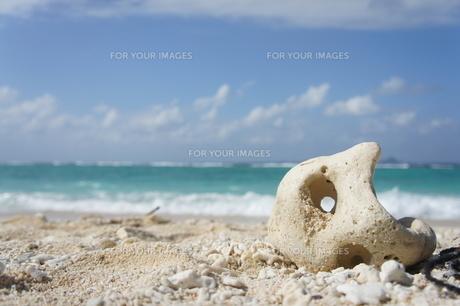 サンゴの海の写真素材 [FYI00116703]
