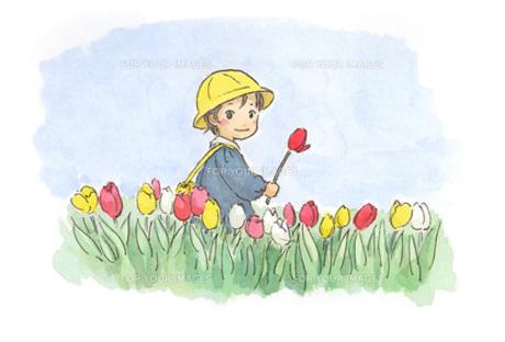 チューリップ畑の園児の素材 [FYI00116722]