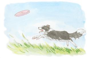 フリスビーを追う犬の素材 [FYI00116728]