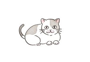 座る猫の素材 [FYI00116773]