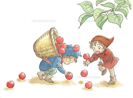 赤い実を拾う小人の素材 [FYI00116777]