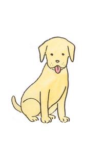 おすわりする犬の素材 [FYI00116778]