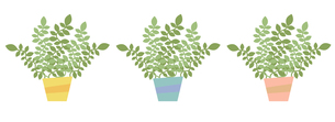 観葉植物3色セットの写真素材 [FYI00116855]