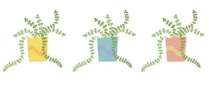 観葉植物ツル3色セットの写真素材 [FYI00116859]