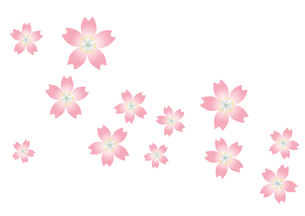 桜の背景の写真素材 [FYI00116862]