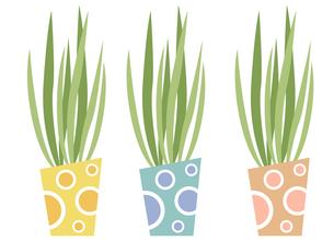 観葉植物3色セットの写真素材 [FYI00116863]