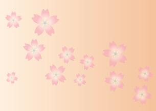 桜の背景(グラデーション)の写真素材 [FYI00116867]