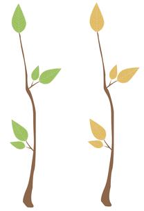 木の枝2本セットの写真素材 [FYI00116877]
