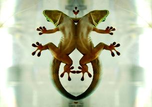 トカゲのレリーフの写真素材 [FYI00117011]