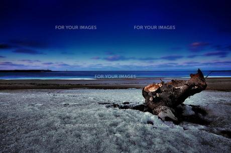 海 砂浜 雪 流木の素材 [FYI00117121]
