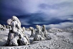 八甲田 樹氷の写真素材 [FYI00117135]