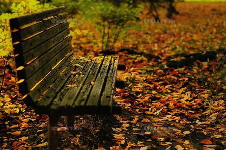 枯れ葉とベンチの写真素材 [FYI00117139]