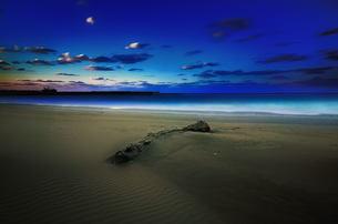流木 砂浜 海の写真素材 [FYI00117152]