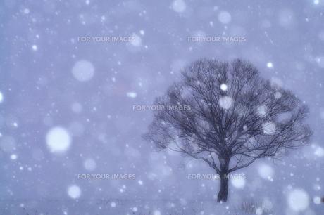 降りしきる雪と枯れ木の素材 [FYI00117157]