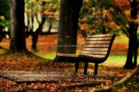 落ち葉とベンチの写真素材 [FYI00117173]