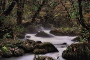 奥入瀬渓流の素材 [FYI00117176]
