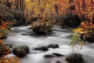 奥入瀬渓流の写真素材 [FYI00117177]