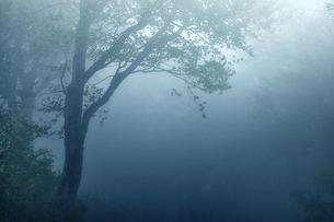 朝靄の素材 [FYI00117181]