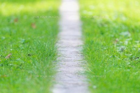 緑の素材 [FYI00117190]