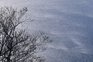木と湖面の素材 [FYI00117197]
