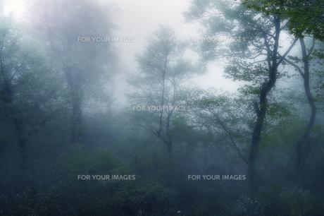朝靄の霧の素材 [FYI00117205]