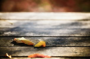 落ち葉の写真素材 [FYI00117210]