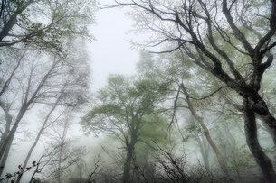 朝靄の森の素材 [FYI00117214]