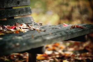 落ち葉とベンチの素材 [FYI00117216]