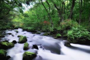 奥入瀬渓流の写真素材 [FYI00117219]