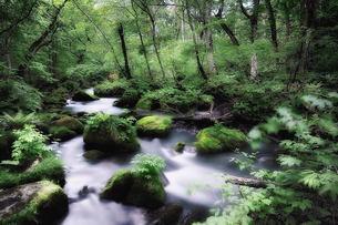 奥入瀬渓流の素材 [FYI00117230]