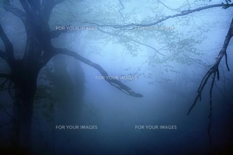 霧の森の素材 [FYI00117231]