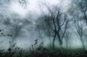 霧の森の素材 [FYI00117232]