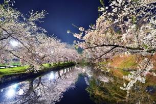 青森県弘前市弘前公園夜桜の素材 [FYI00117235]