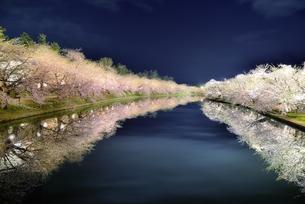 青森県弘前市弘前公園夜桜の素材 [FYI00117246]