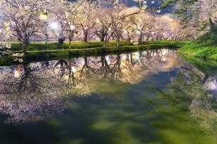 青森県弘前市弘前公園夜桜の素材 [FYI00117251]