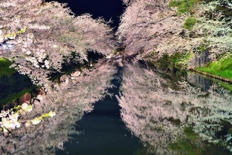 青森県弘前市弘前公園夜桜の素材 [FYI00117259]