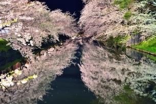青森県弘前市弘前公園夜桜の写真素材 [FYI00117259]
