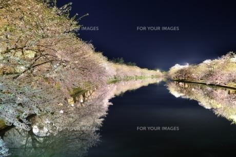 青森県弘前市弘前公園夜桜の素材 [FYI00117313]