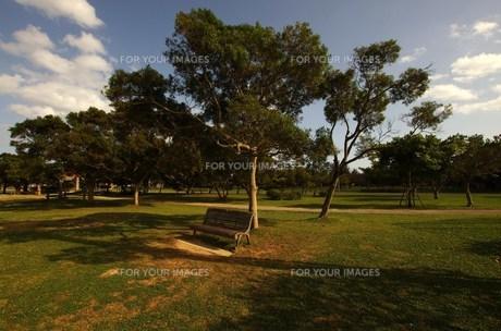 公園の椅子の写真素材 [FYI00117512]