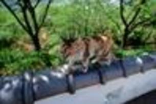 猫の散歩の写真素材 [FYI00117555]